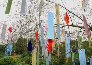 Tanabata0161m1